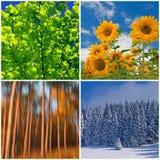 Collage van vier seizoenen Stock Afbeelding