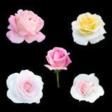 Collage van vijf rozen Royalty-vrije Stock Foto