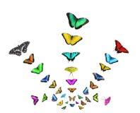 Collage van vliegende vlinders van verschillende die kleuren op witte achtergrond worden geïsoleerd vector illustratie
