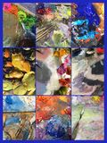 Collage of variety of colorful acrylic paints palettes Stock Images