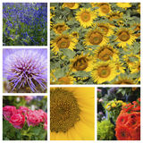 Collage of various beautiful flowers Stock Photos