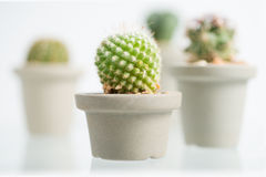 Collage of various cactus in front of white background Stock Images