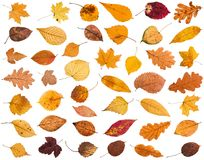 collage from various dried autumn fallen leaves Royalty Free Stock Images