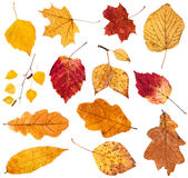 Collage from various fallen leaves isolated Royalty Free Stock Images