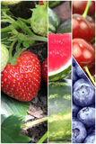 Collage of various fruits Royalty Free Stock Images
