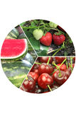 Collage of various fruits Stock Photography
