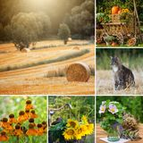 Collage of various pictures of summer landscape and flowers stock photo
