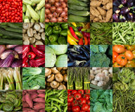 Collage of vegetables. Like asparagus, lettuce, tomato and cucumber Stock Image