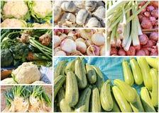 Collage vegetal Imágenes de archivo libres de regalías