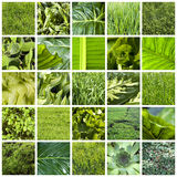 Collage verde Immagine Stock
