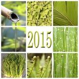 2015, collage verde de la vegetación Imagenes de archivo