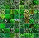 Collage verde della natura, fondo della carta da parati della natura Immagini Stock Libere da Diritti