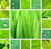 Collage vert Photo stock