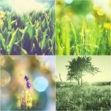 Collage vert Photo stock