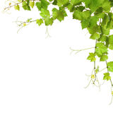 Collage of vine leaves royalty free stock images