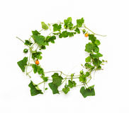 Collage of vine leaves on white background (clipping path) Royalty Free Stock Photography