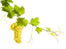 Collage of vine leaves and yellow grape royalty free stock photos
