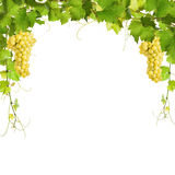 Collage of vine leaves and yellow grapes Royalty Free Stock Images