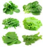 Collage vom Salat Stockbild