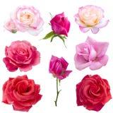 Collage von acht Rosen Lizenzfreie Stockbilder