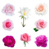 Collage von acht Rosen Lizenzfreies Stockfoto