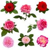 Collage von acht roten Rosen Lizenzfreie Stockfotografie