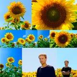 Collage von Blumen der Sonnenblume und des jungen Mannes auf dem Gebiet Lizenzfreie Stockbilder