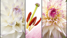 Collage von Blumen in lila Weiß lizenzfreies stockfoto
