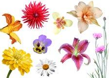 Collage von den Blumen lizenzfreie stockfotografie
