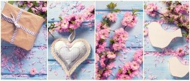 Collage von den Fotos mit rosa Kirschblüte blüht auf blauer hölzerner Rückseite Stockbild