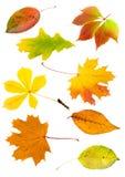 Collage von den Herbstblättern Stockfoto