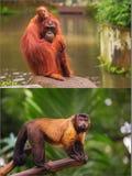 Collage von den kleinen Affen, die auf einem Baum sitzen Lizenzfreies Stockbild