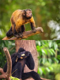 Collage von den kleinen Affen, die auf einem Baum sitzen Stockfotos