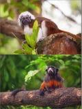 Collage von den kleinen Affen, die auf einem Baum sitzen Stockbild
