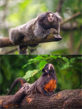 Collage von den kleinen Affen, die auf einem Baum sitzen Lizenzfreie Stockfotos
