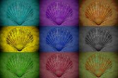 Collage von den Muscheln behandelt mit verschiedenen Farbfiltern stockfotografie