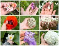 Collage von farbigen Frühlingsblumen in der Hand eines jungen Mädchens auf dem weißen Hintergrund stockfoto