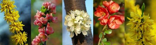 Collage von Frühlingsblumen lizenzfreies stockbild