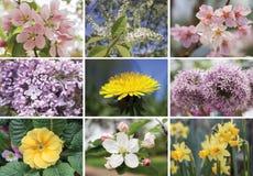 Collage von Frühlingsblumen Stockbild