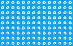 Collage von Kamillenblumen auf einem Blau Stockfoto