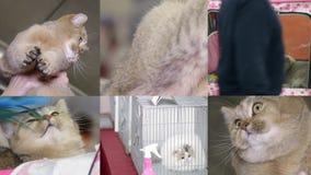Collage von Katzen auf der Katzenshow stock video footage