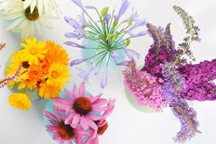 Collage von Krautblumen Lizenzfreies Stockbild