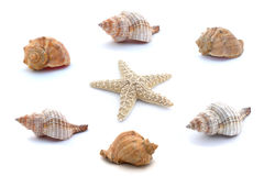 Collage von Muscheln und Starfish lokalisiert auf weißem Hintergrund lizenzfreies stockbild