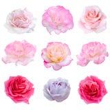 Collage von neun Rosen Lizenzfreies Stockbild