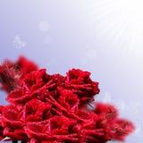 Collage von roten Rosen Lizenzfreies Stockfoto