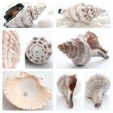 Collage von Seashells lizenzfreies stockbild