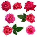 Collage von sieben roten Rosen Lizenzfreies Stockfoto