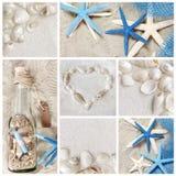 Collage von Sommer Seashells Lizenzfreies Stockbild