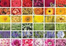Collage von vielen Bildern von verschiedenen bunten Blumen Stockbild