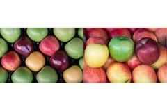 Collage von zwei Fotos von vier verschiedenen reifen Äpfeln schreibt Lizenzfreie Stockbilder